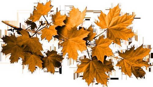 tube feuilles d'automne pour créas automne autumn leaves