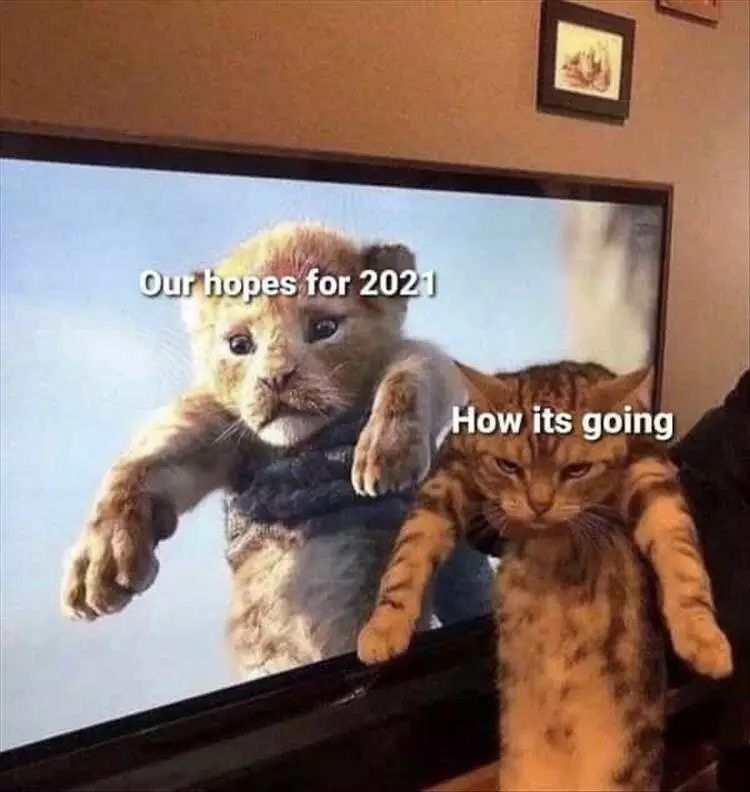 20 Most Hilarious Animal Memes Of The Day In 2021 Funny Animal Memes Animal Memes Cute Animal Quotes