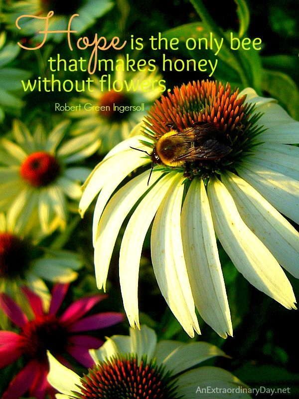 Hope The Week At A Glance 8 10 An Extraordinary Day Flower Quotes Bee Quotes Scripture Artwork