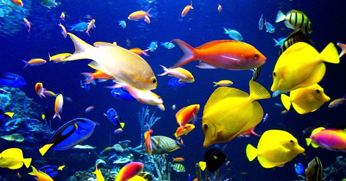 Unduh 5800 Background Pemandangan Bawah Laut HD Terbaik