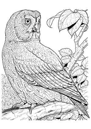 ausmalbild eule im grünen | malvorlage eule, vogel malvorlagen und ausmalbilder eulen