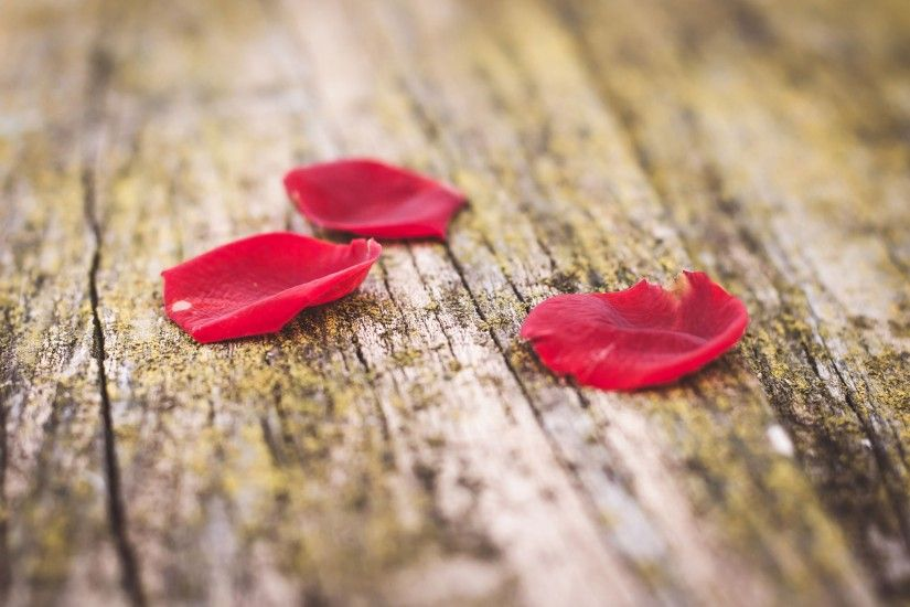 Rose Red Petals on a Wooden Bench