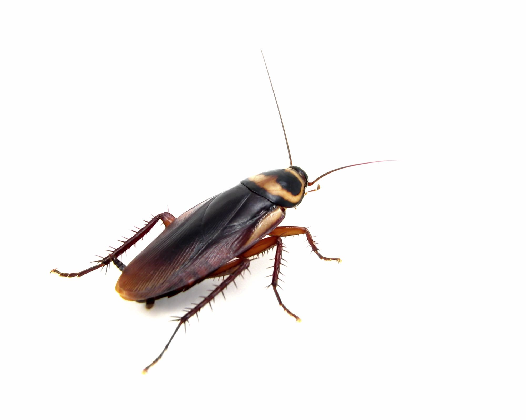 43. Get over my fear of cockroaches | Way to go | Pinterest ...