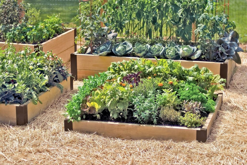 99 Unusual Vegetable Garden Ideas For Home Backyard