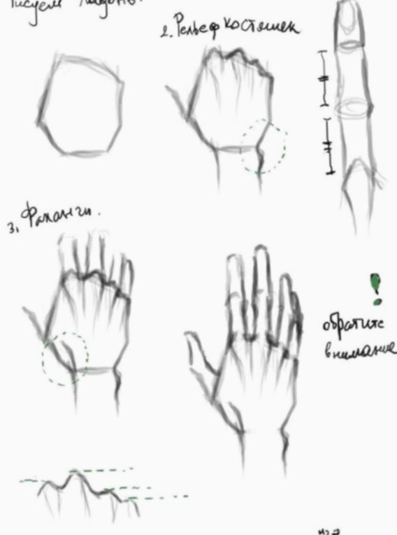 Drawing Hand Video Anatomy Eyesketch Drawingeyes Drawingofeyes Drawing Tips Anatomy Drawing Hand Drawing Reference
