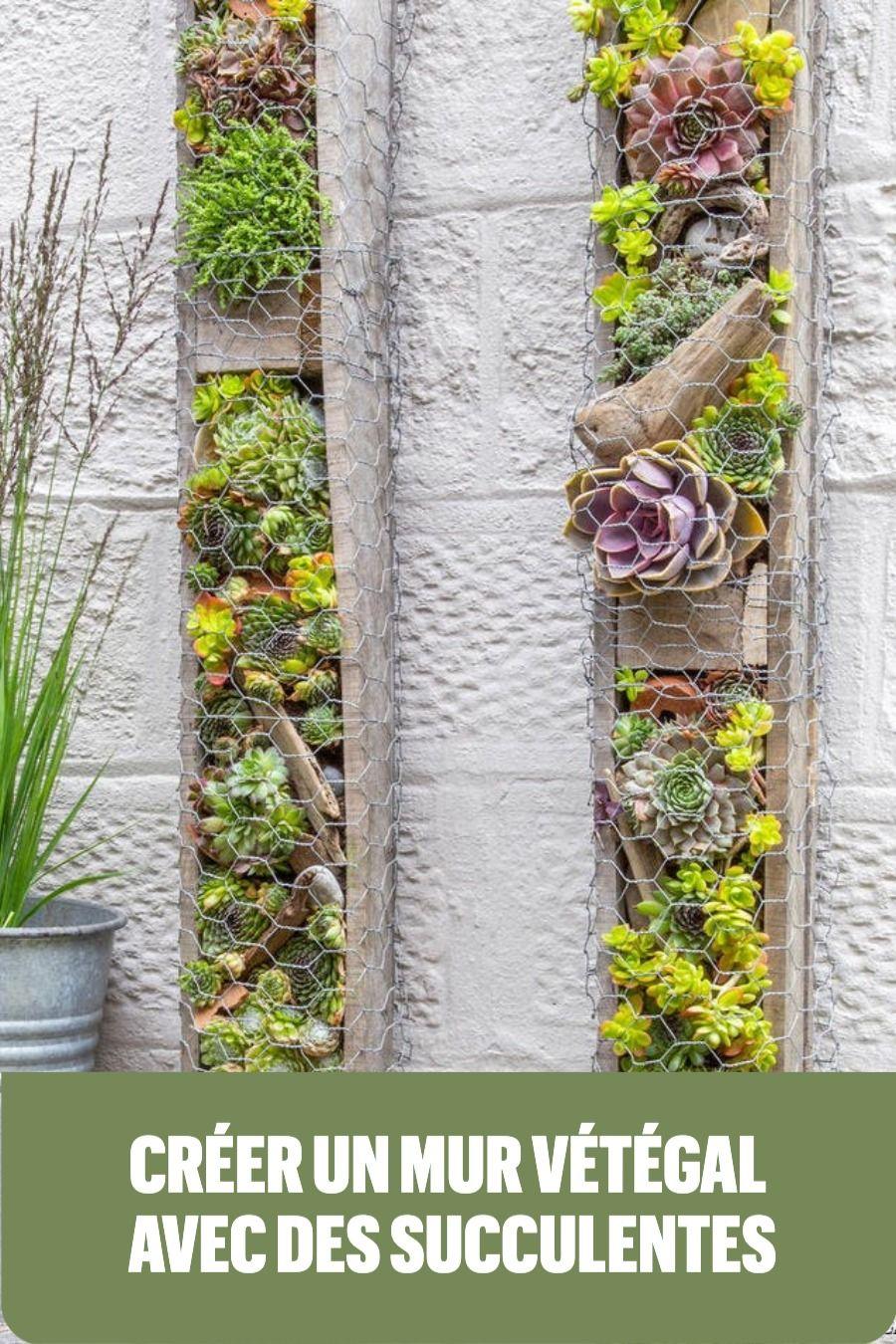 Faire Un Mur Végétal Extérieur : faire, végétal, extérieur, Faire, Végétal, Extérieur, Grillage, Succulentes, Exterieur,, Vegetal,