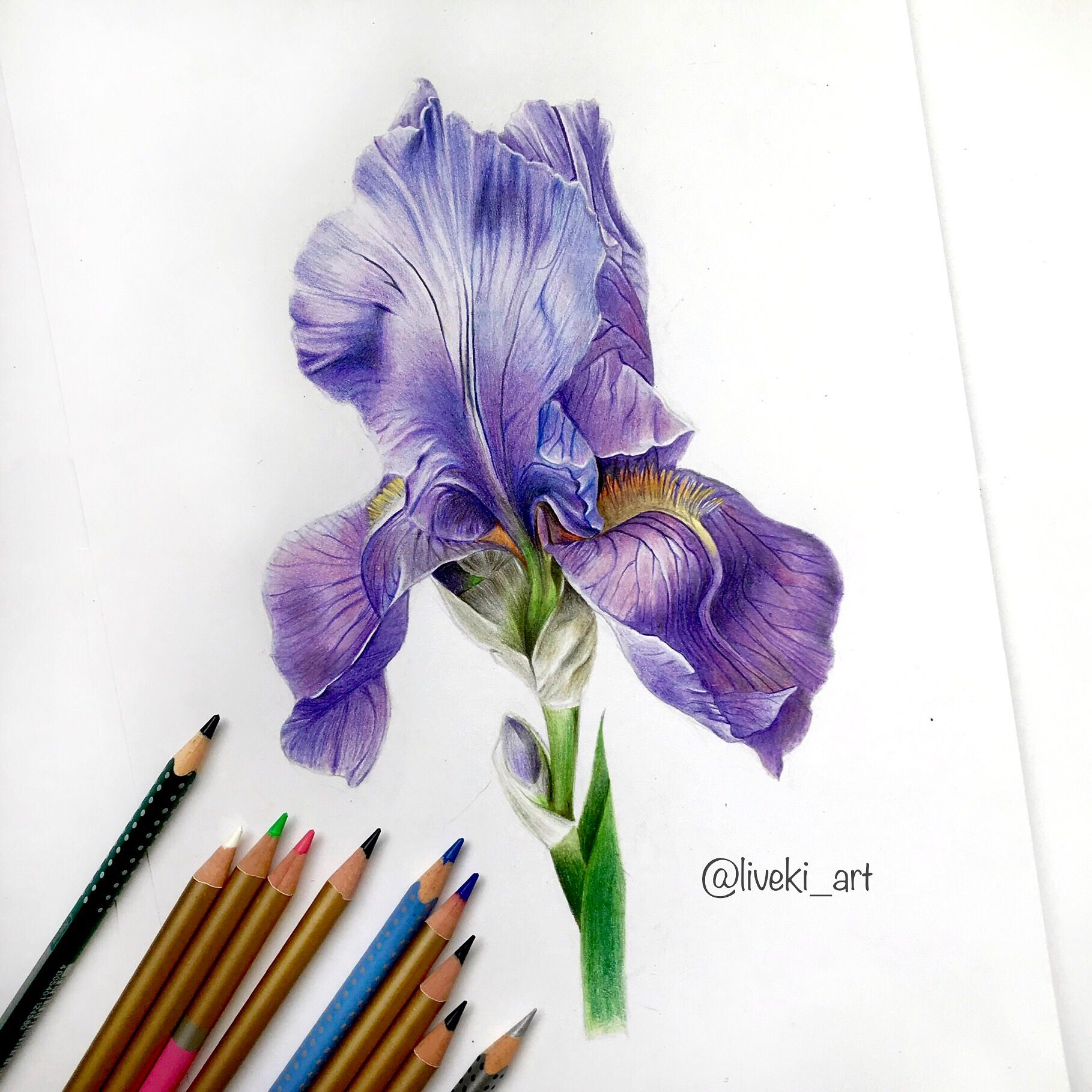 Iris Color Pencil Drawing Flower Drawing Color Pencil Art Color Pencil Drawing