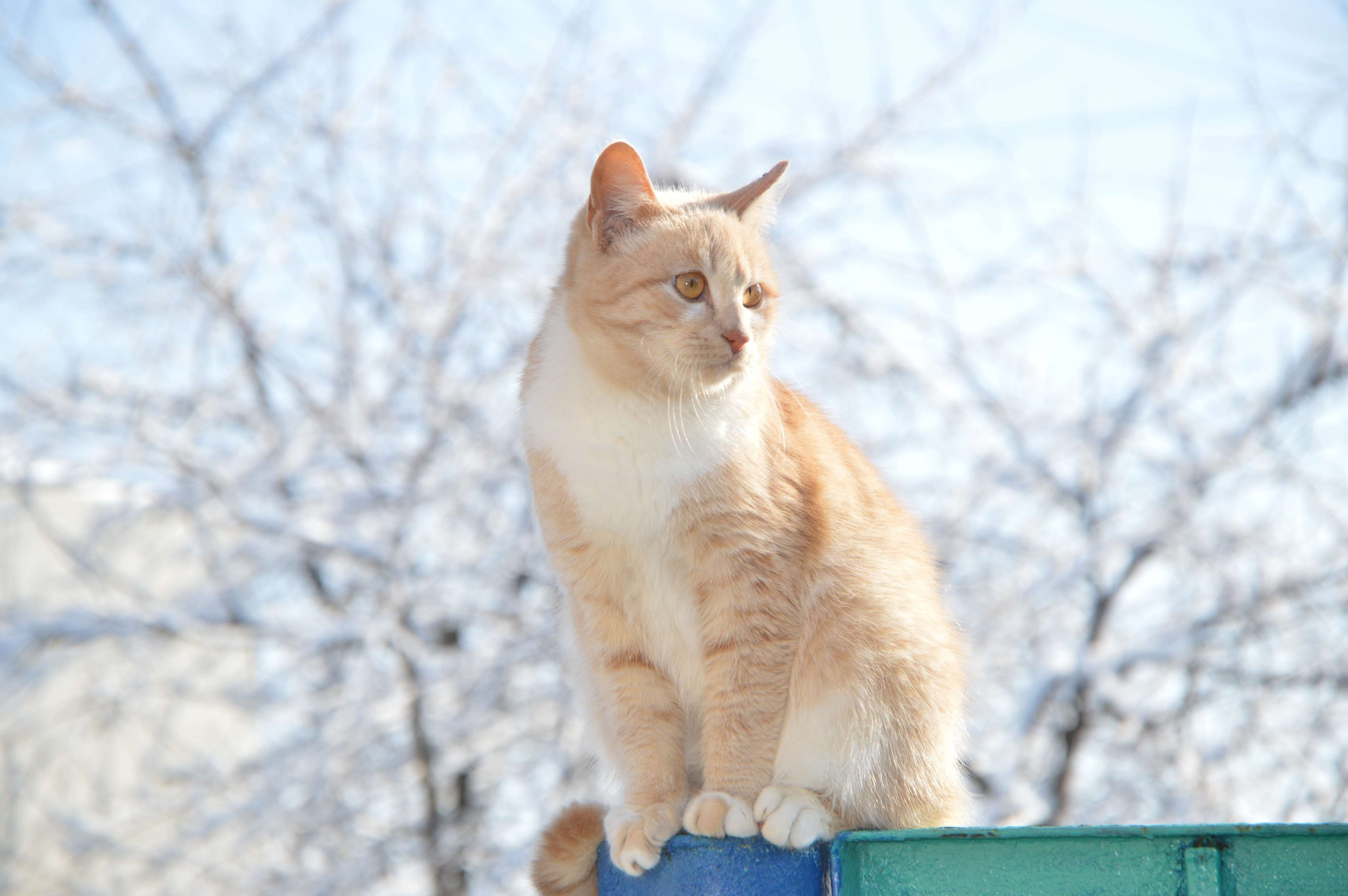 Cat Housecat Nature Pet Red Headed Cat Redhead Stomach Young Cat