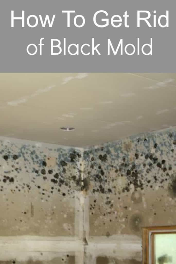 How To Get Rid Of Black Mold With Images Mold In Bathroom Clean Black Mold Mold Remover