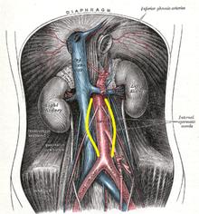 يعتمد علاج تمدد الأوعية الدموية الأبهري البطني Aaa في الغالب على حجمه يتم تجميع Aaas في ثلاثة أح Aortic Aneurysm Abdominal Aorta Abdominal Aortic Aneurysm