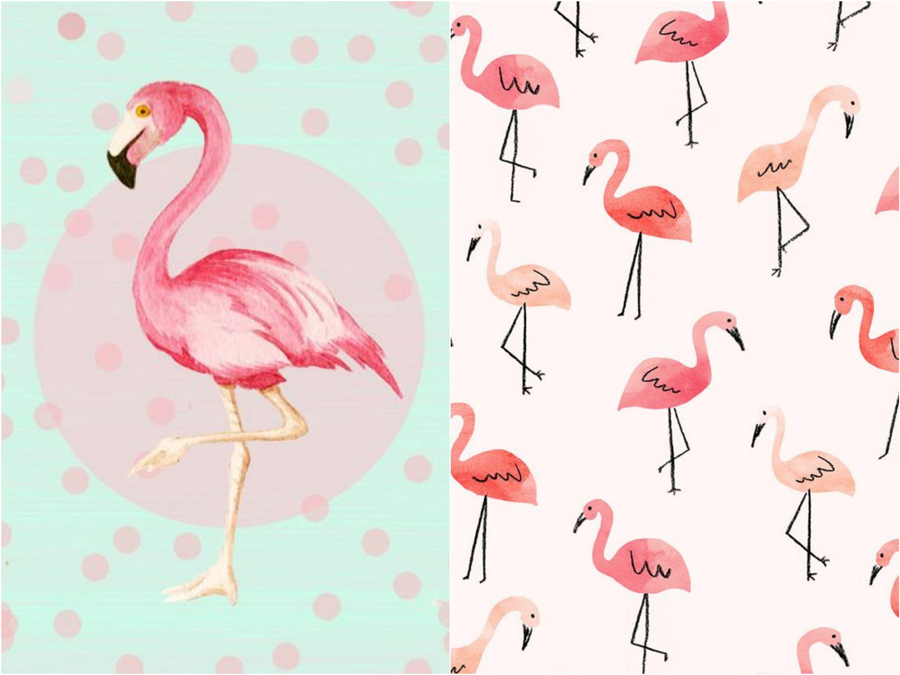 Festa de Flamingo 10 motivos para ter uma