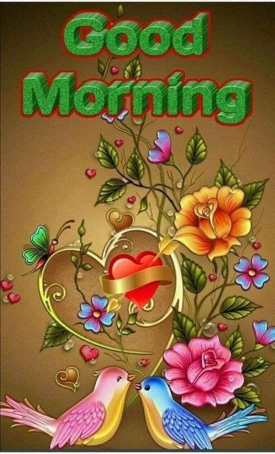 Bilder zu guten morgen mein schatz   Beautiful flower