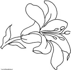 Easter Lily Printable Template Flower Coloring Pages Flower Drawing Free Printable Coloring Pages