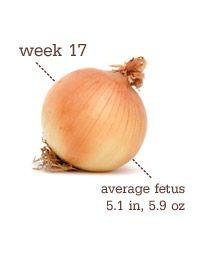 Pregnancy Week-by-Week | Week by week, The bump and Babies
