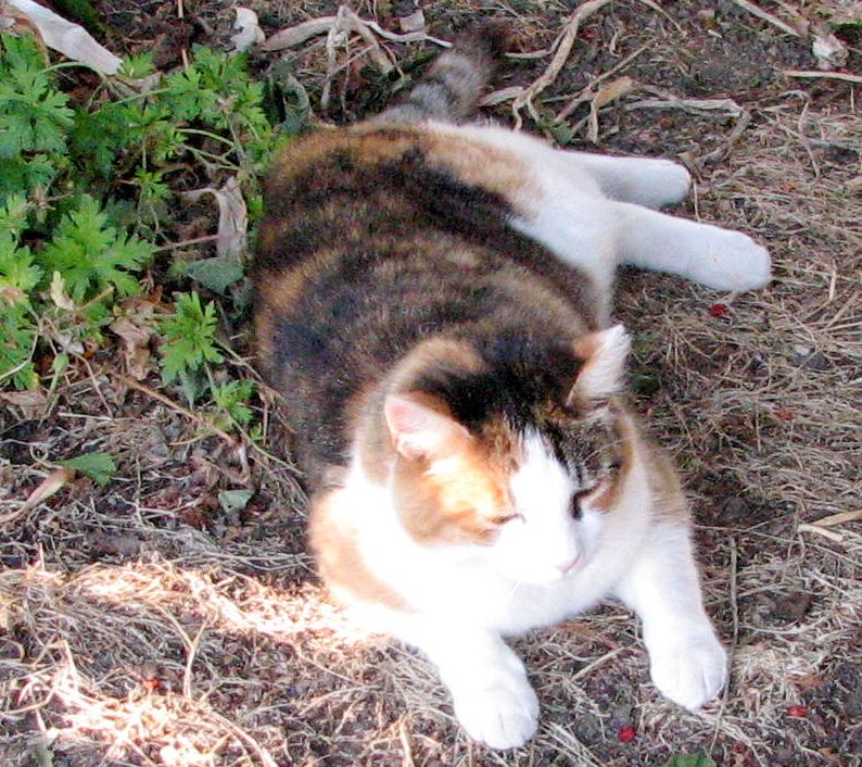 Kitty is our assistant greeter at Feller House Bed and