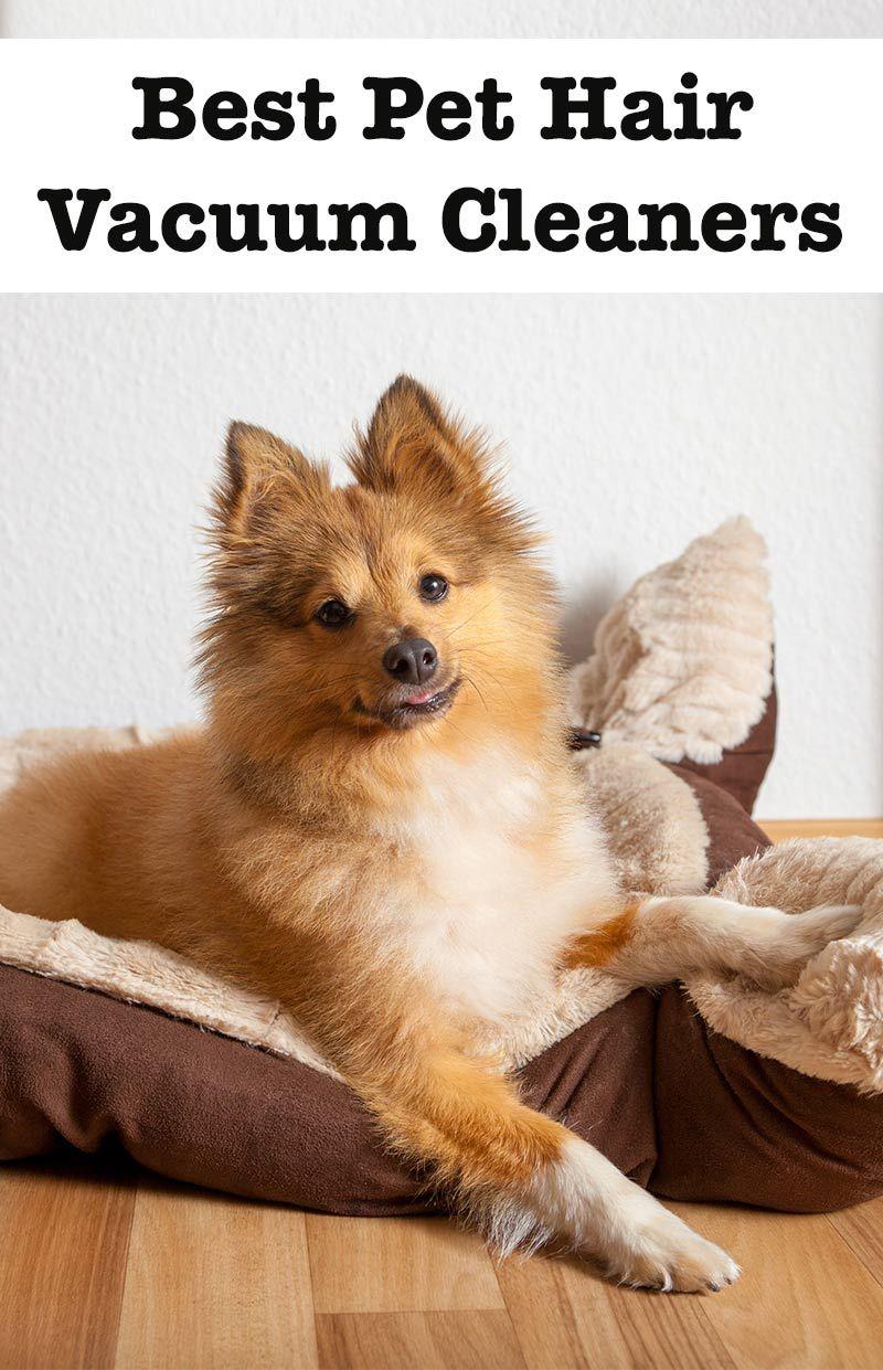Best Vacuum For Pet Hair Reviews Of The Top Brands Best Pet