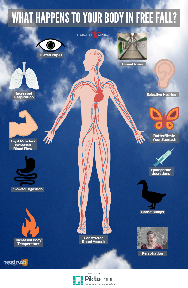 This Is How Your Body Reacts To Free Fall Flightlinefreefall Headrushtech Freefalling Freefall Free Falling Adventure Activities Fall Infographic
