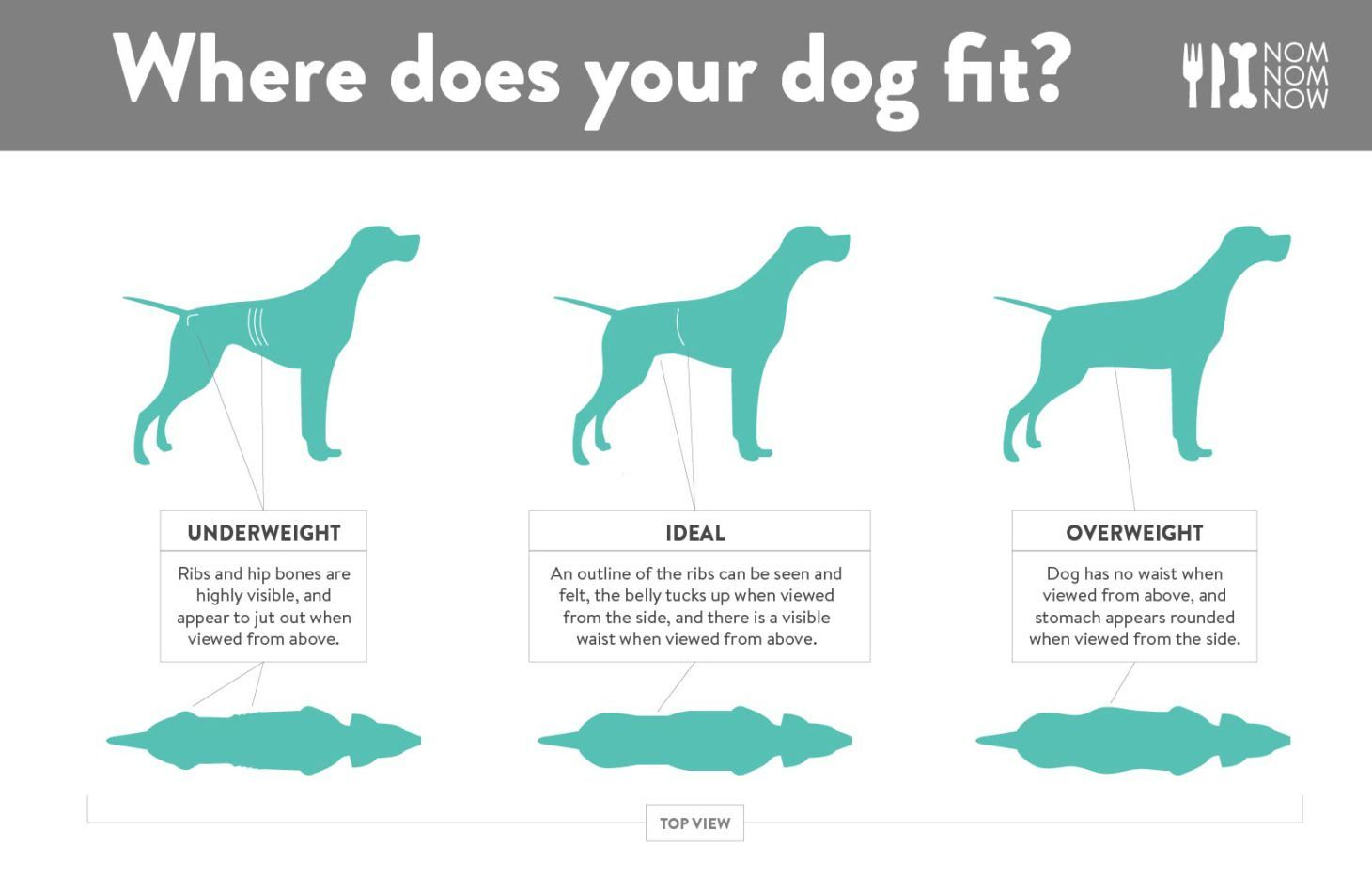 Is your dog a healthy weight nomnomnow blog dog weight