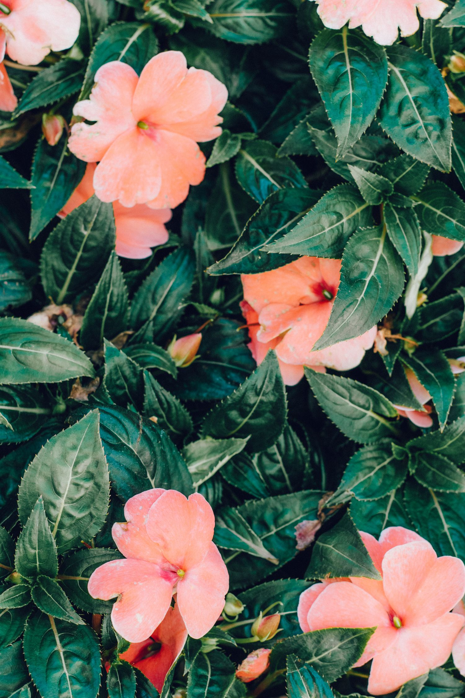 2560×1440 57+ plain pink wallpapers on wallpaperplay>. Pink Flowers | Wall Art | Flower background iphone, Tumblr ...