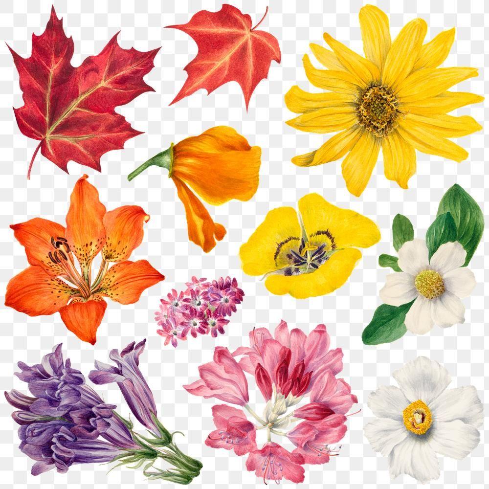Hand Drawn Wild Plants Png Botanical Illustration Set Free Image By Rawpixel Com Manotang Flower Illustration Botanical Illustration How To Draw Hands