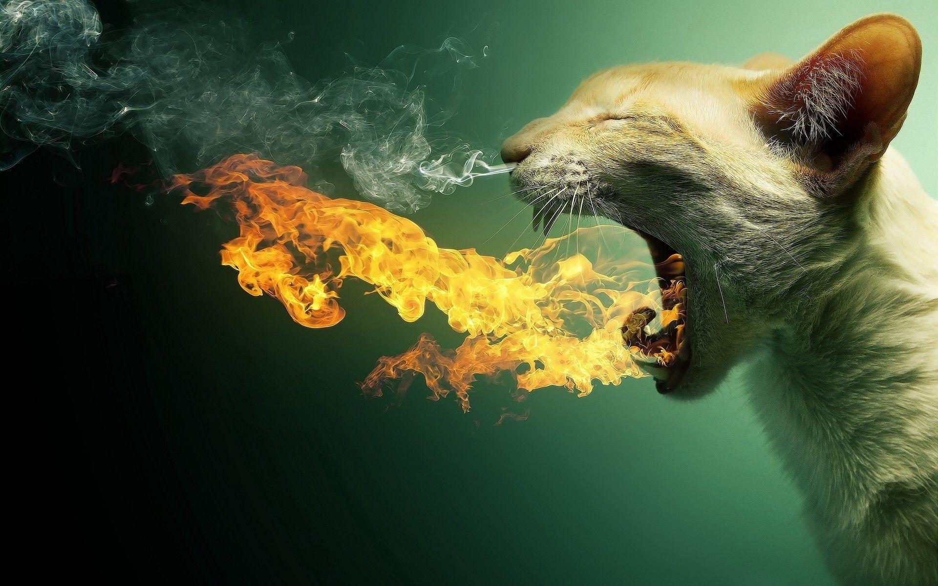 fire breathing cat cool
