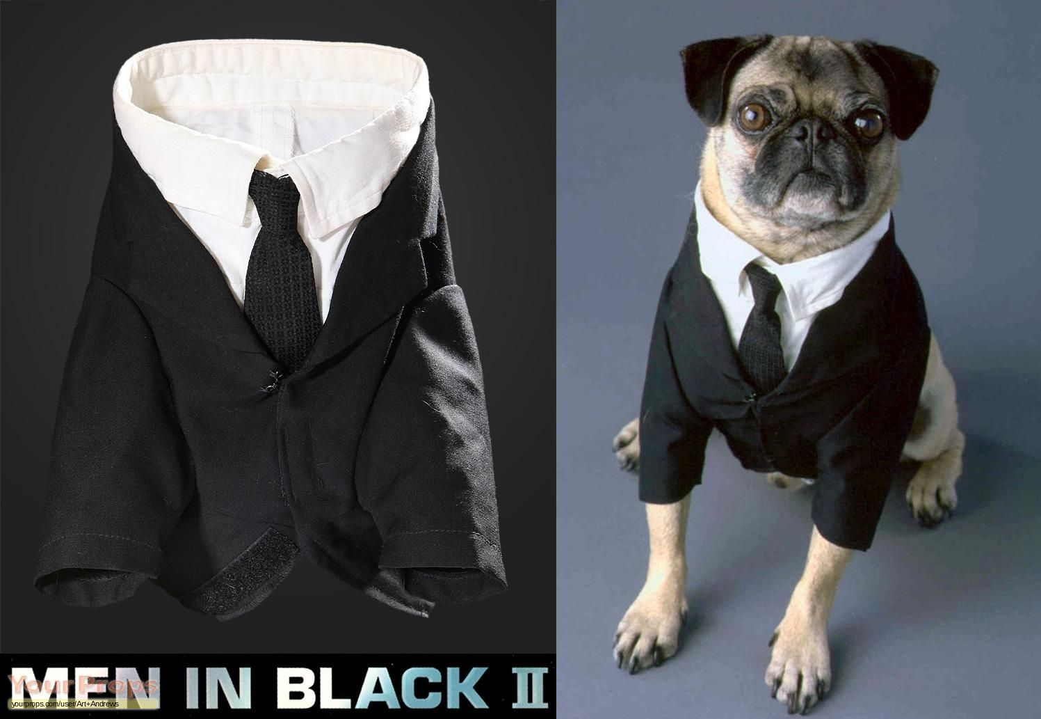 Frank The Pug From Men In Black Frank The Pug Pugs In Costume