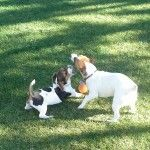 Lizzie playing with Jessi
