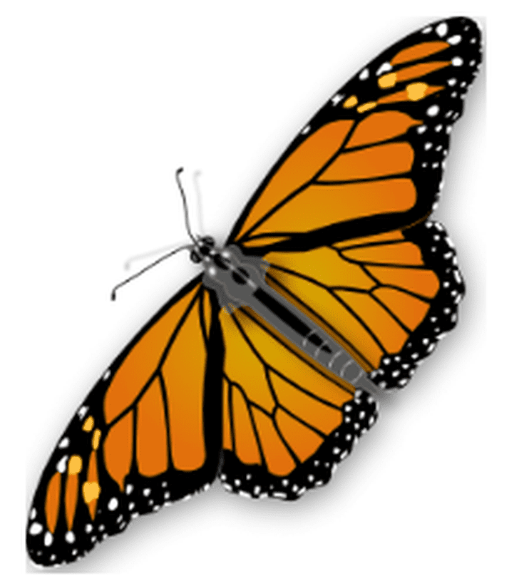 10+ Free monarch butterfly clipart information