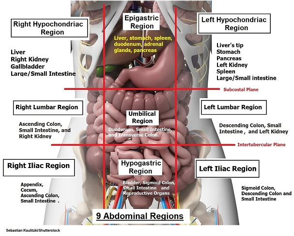 12++ Four quadrants of the body inspirations