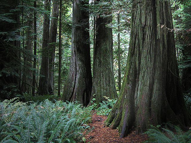 ...and into the deep, dark woods... by axiepics, via Flickr - Cathedral Grove, between Qualicum Beach and Port Alberni (Vancouver Island)