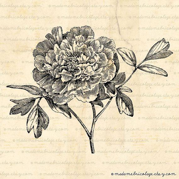Peony Flower, Botanical, Digital Image, Digital Download, Iron on Transfer, Papercrafts, Pillows, T-Shirts, Tote Bags, Burlap, No 01256