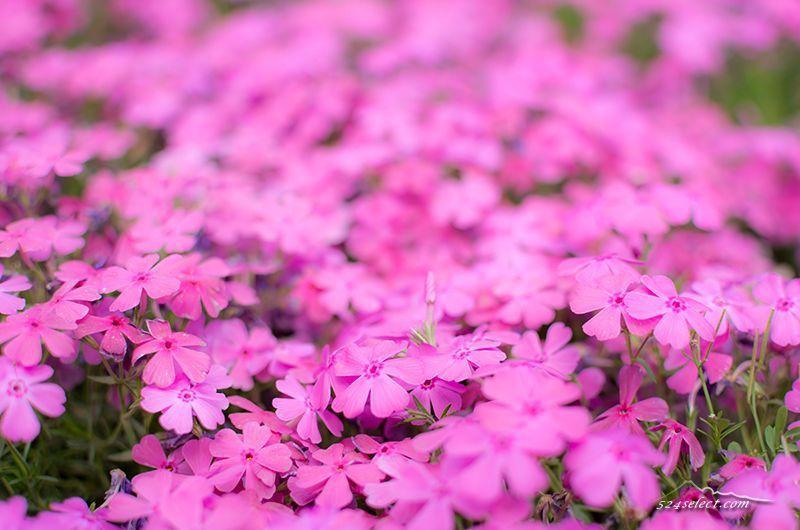 20150508_photo_18.jpg (800×530)