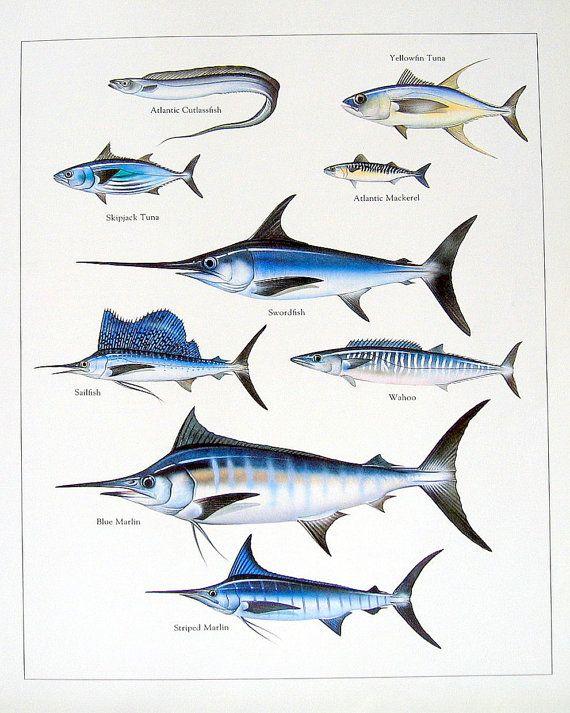 Atlantic Cutlassfish Yellowfin Tuna Swordfish Vintage 1984 Fish
