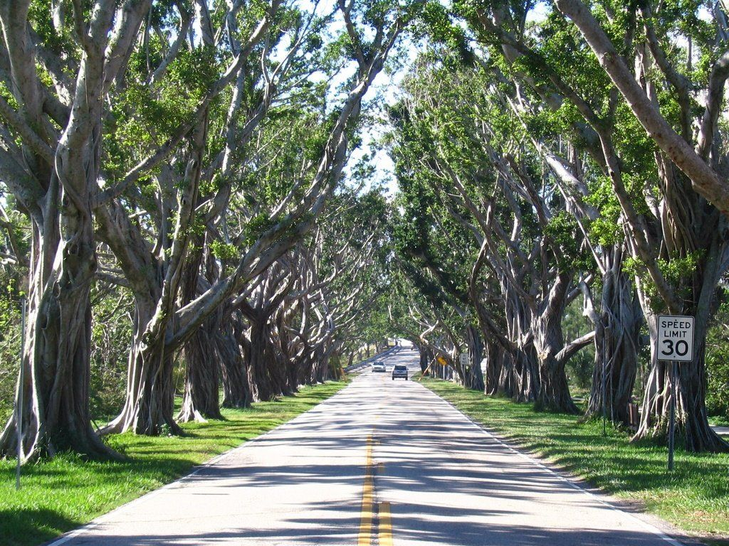 The Path To Hobe Sound Beach I Love These Trees More Than Can Articulate Definitely My Favorite View From High School