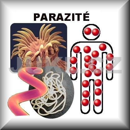 jukl paraziti