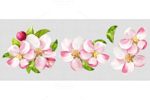 Apple Tree Blossoms Png Kirschbluten Karte Hochzeit Hochzeitskarten
