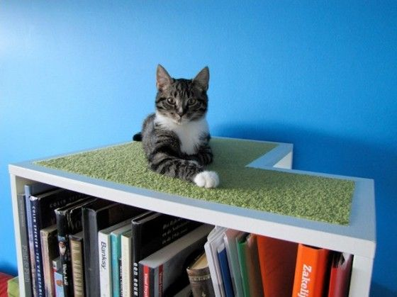 Your cat will love you for buying this bookcase for cats!
