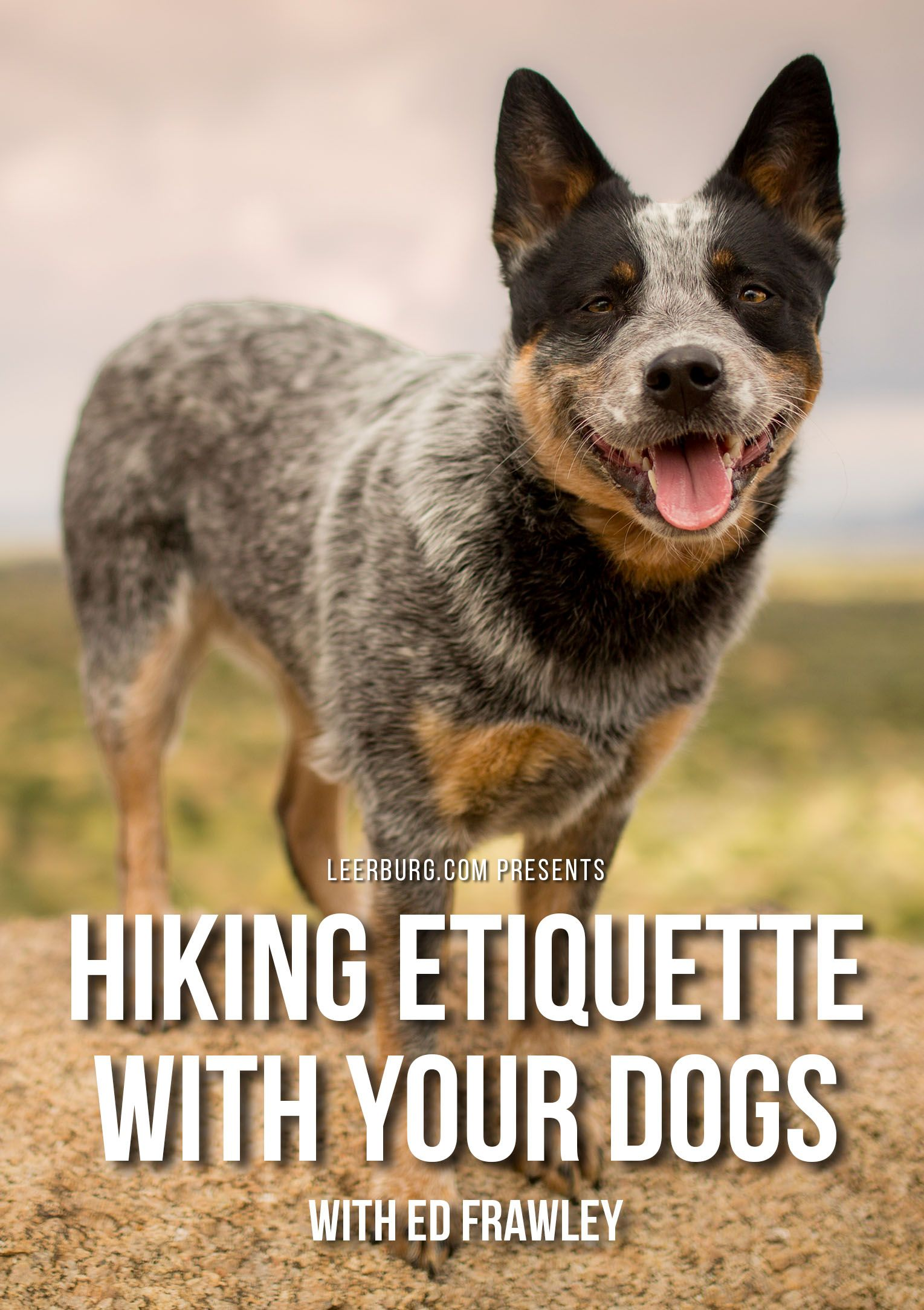 Hiking Etiquette With Your Dogs Dog Behavior Aggressive Dog Dogs