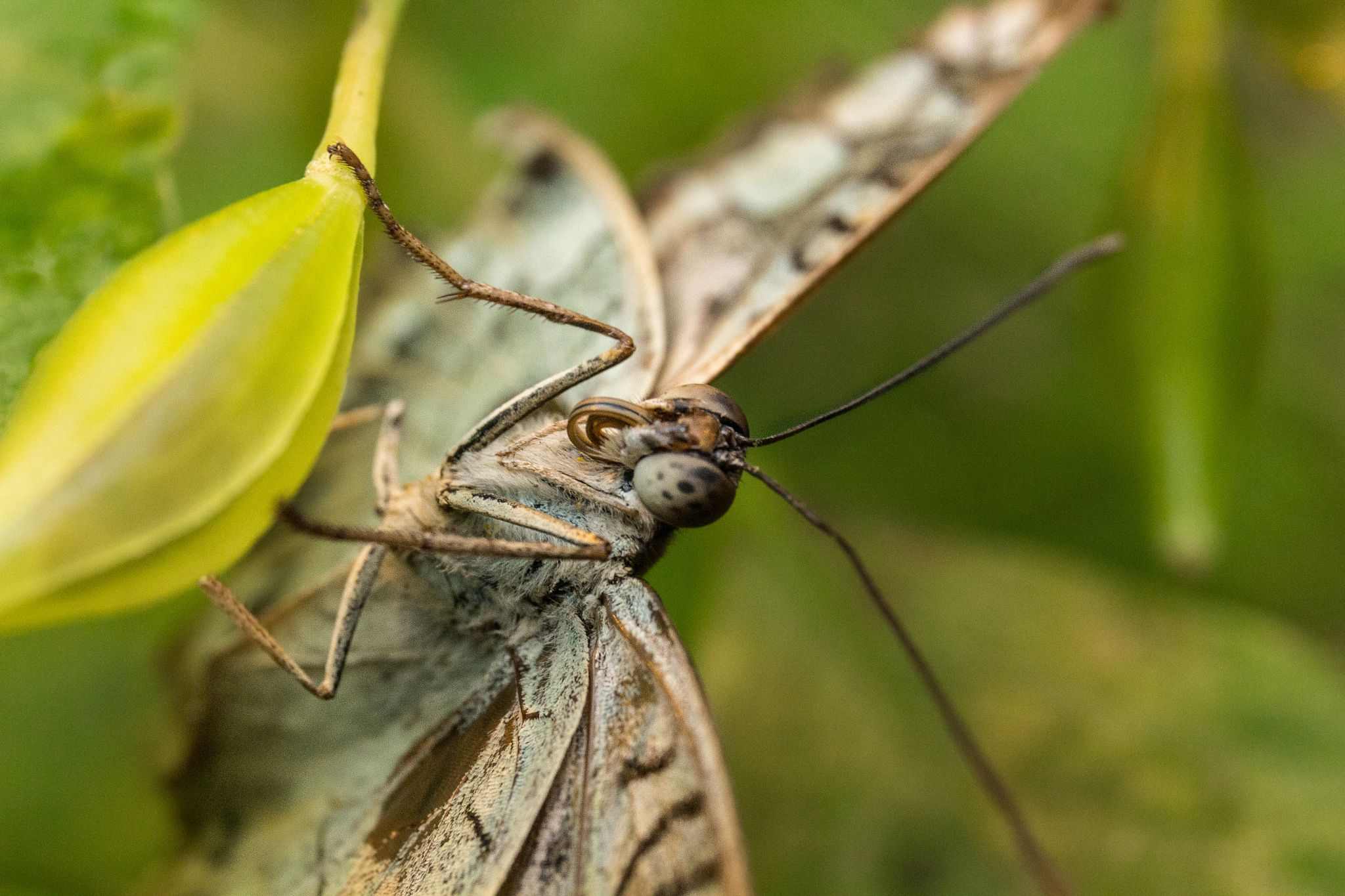 The butterfly nap by Alexandre Surel on 500px