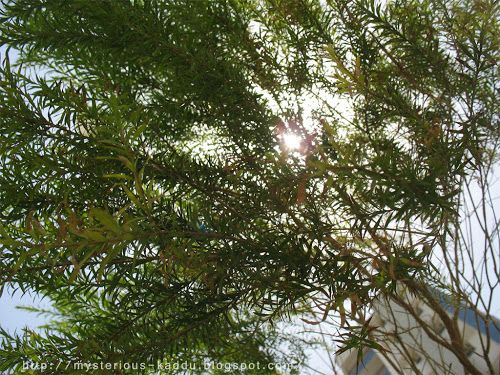 Green Canopy: Photo A Day - From Down Low ~ miss_teerious
