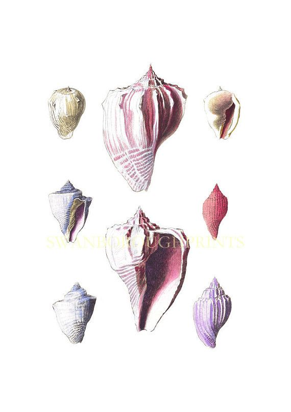 Pink Sea Shells Beach Bathroom Wall Decor. Pink Shell Collection. Beach  Bedroom Shell Print. Home And Living Decoration | Pinterest | Bathroou2026