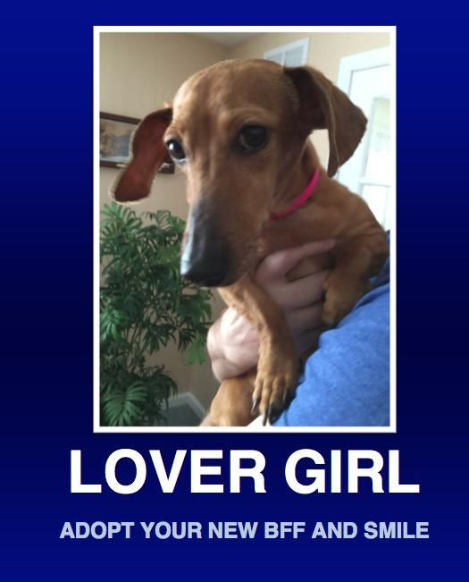 Adopt Kahlan on Adoption, Dachshund rescue, Puppy mills
