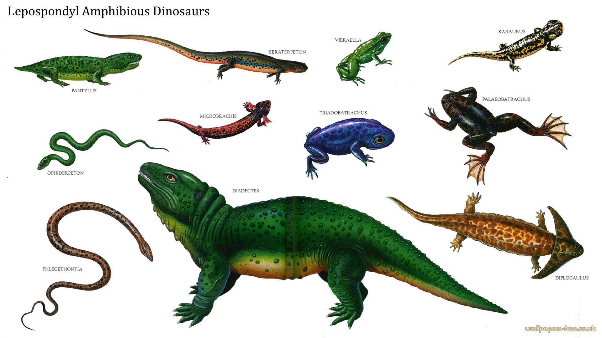 Lepospondyls Amphibious Dinosaurs Image 231397 Jpg 1920 1080 Dinosaur Prehistoric Creatures Dinosaur Images