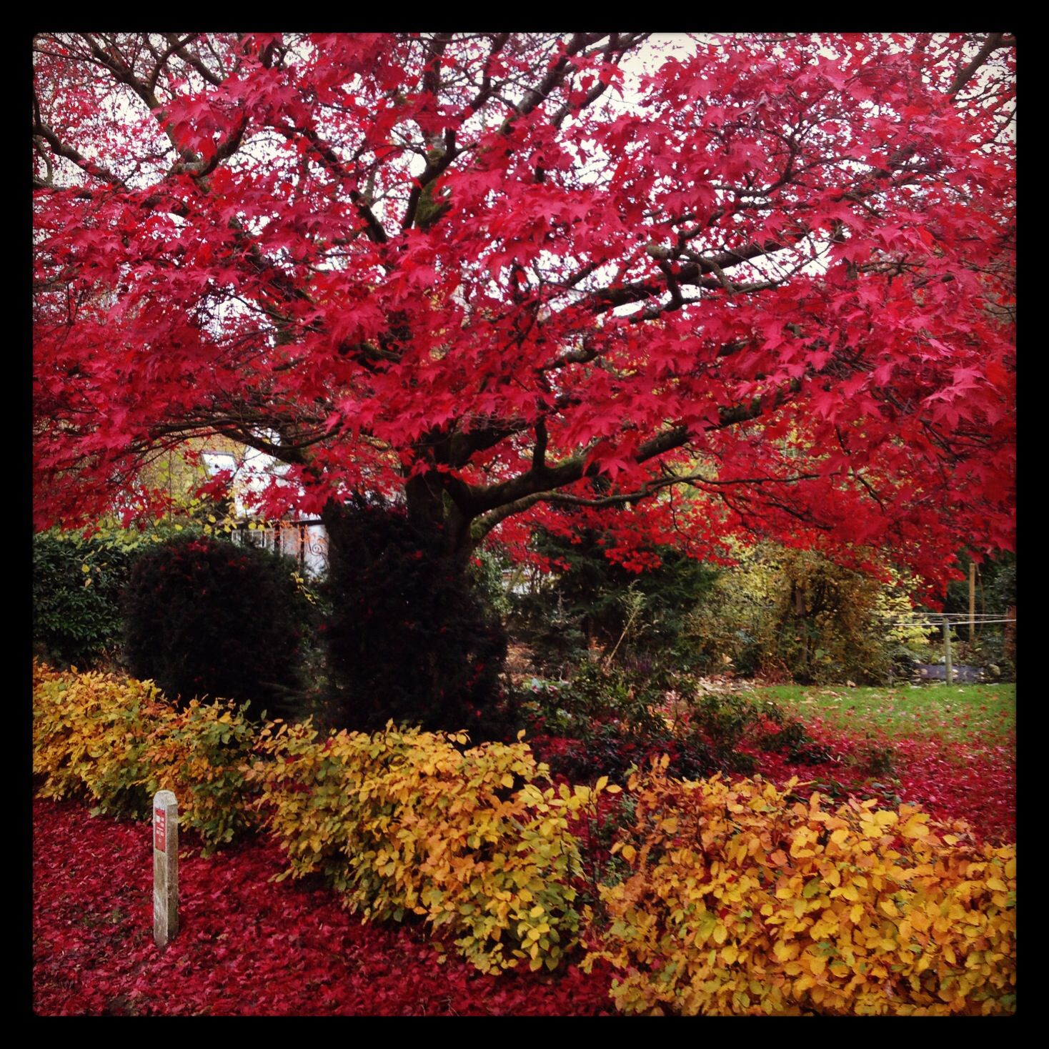 Love the colours of fall!!