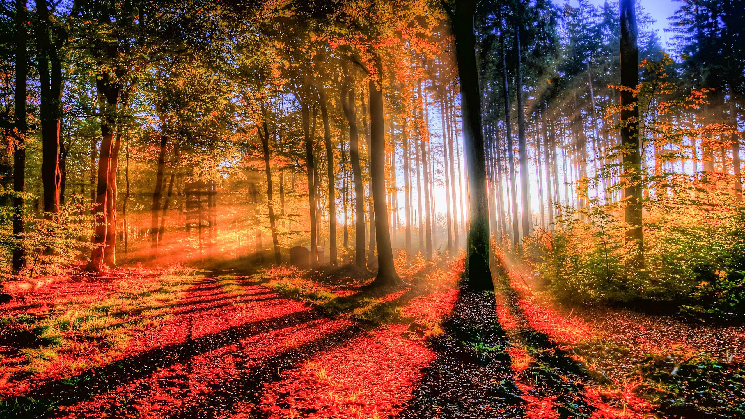 forest wallpapers and backgrounds high definition hd wallpapers rh pinterest com
