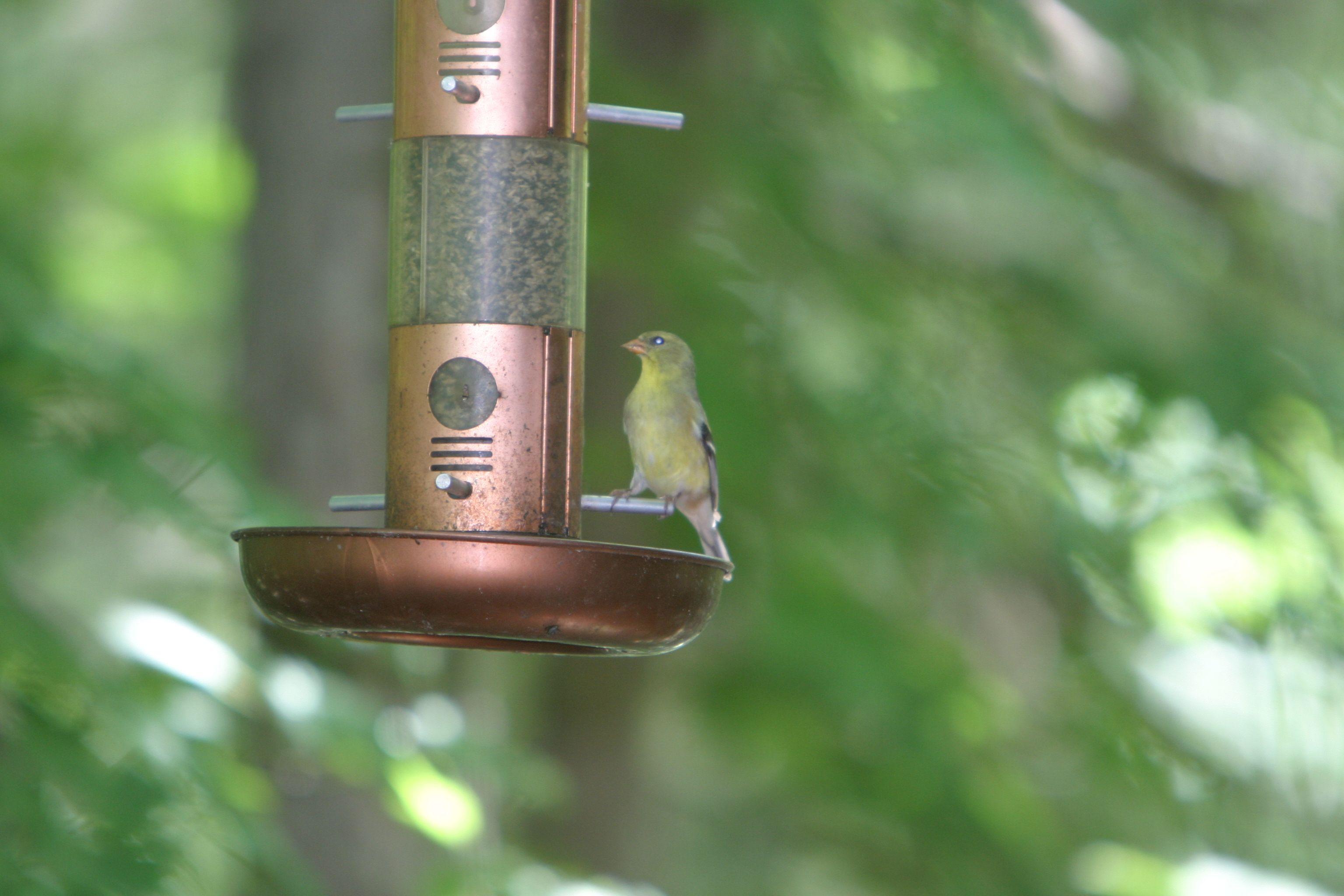 Adorable bird at the feeder.  www.innsbrook-resort.com