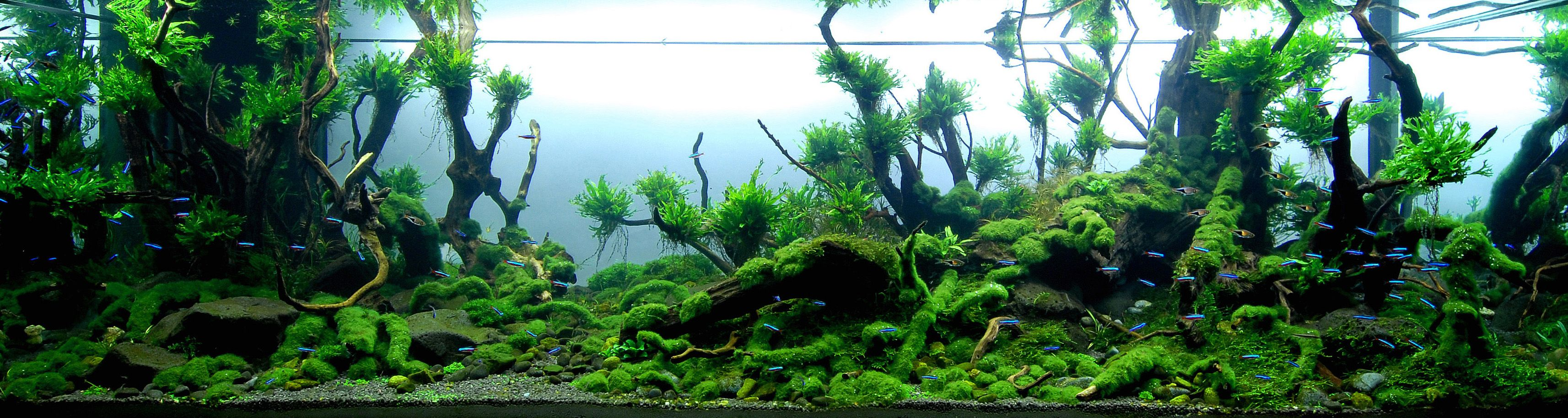 magical forest aquarium Google Search Aquariums