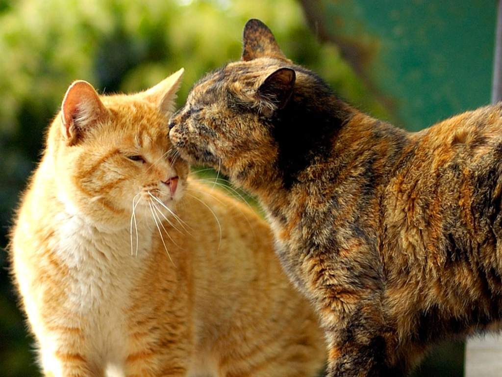 Firestar With Spottedleaf With Images Cats Warrior Cats
