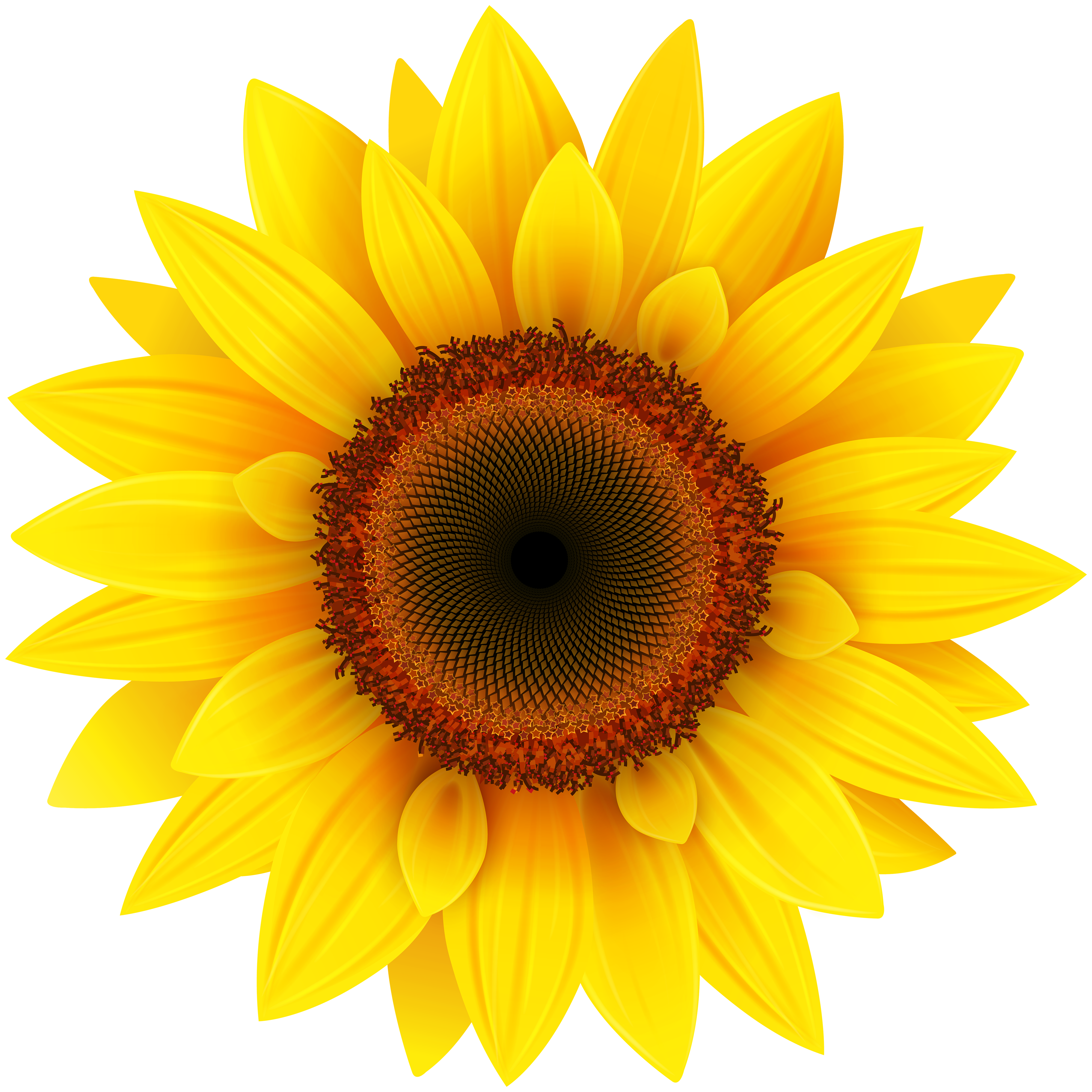 Sunflower PNG Clipart Picture Gallery Yopriceville