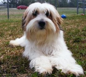 Ragan Is An Adoptable Bearded Collie Dog In New Bern Nc Please